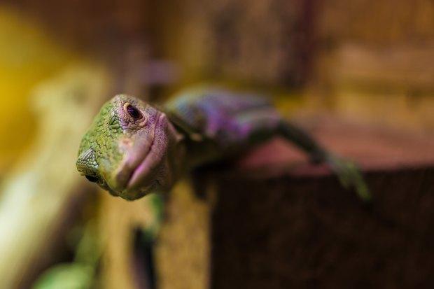 Lizard brain - the amygdala